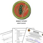 Insect Study Merit Badge