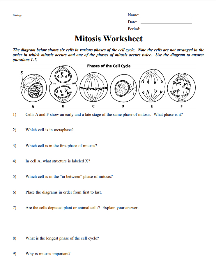 mitosis worksheet pdf - Mitosis Worksheet