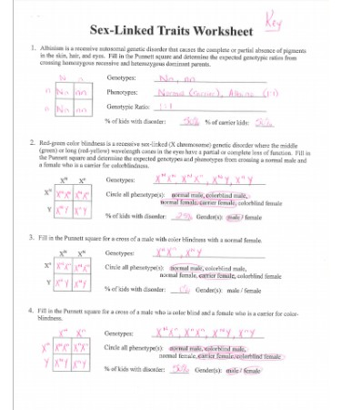 Sex Linked Traits Worksheet Pdf Answer Key Printable